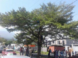 Le jeune malade mental perché sur un arbre (2)