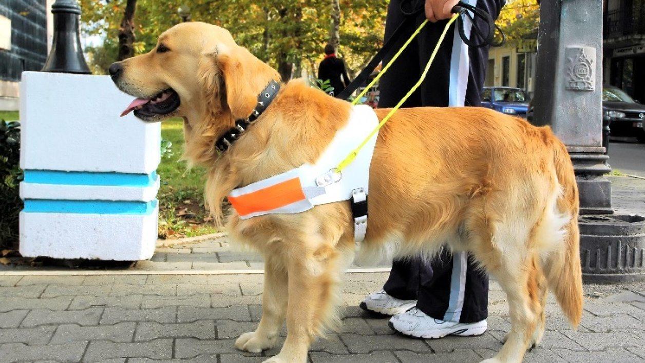 chien-guide-aveugles.jpg